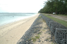 Environment: Replacement of casuarinas trees to curb coastal erosion