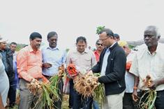 Minister Faugoo calls for more garlic production