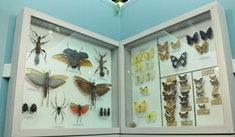 Insectarium inaugurated at Natural History Museum-Nature Gallery