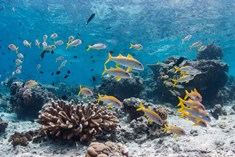 Protection of marine ecosystem: Several stakeholders to sign MoU