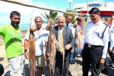 Octopus fishery reopens after two-months' ban